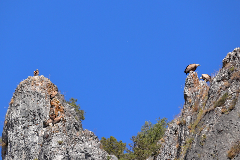 Cañon_Lobos_19-09-07_17